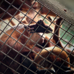 There's always something sad about a monkey in a cage.