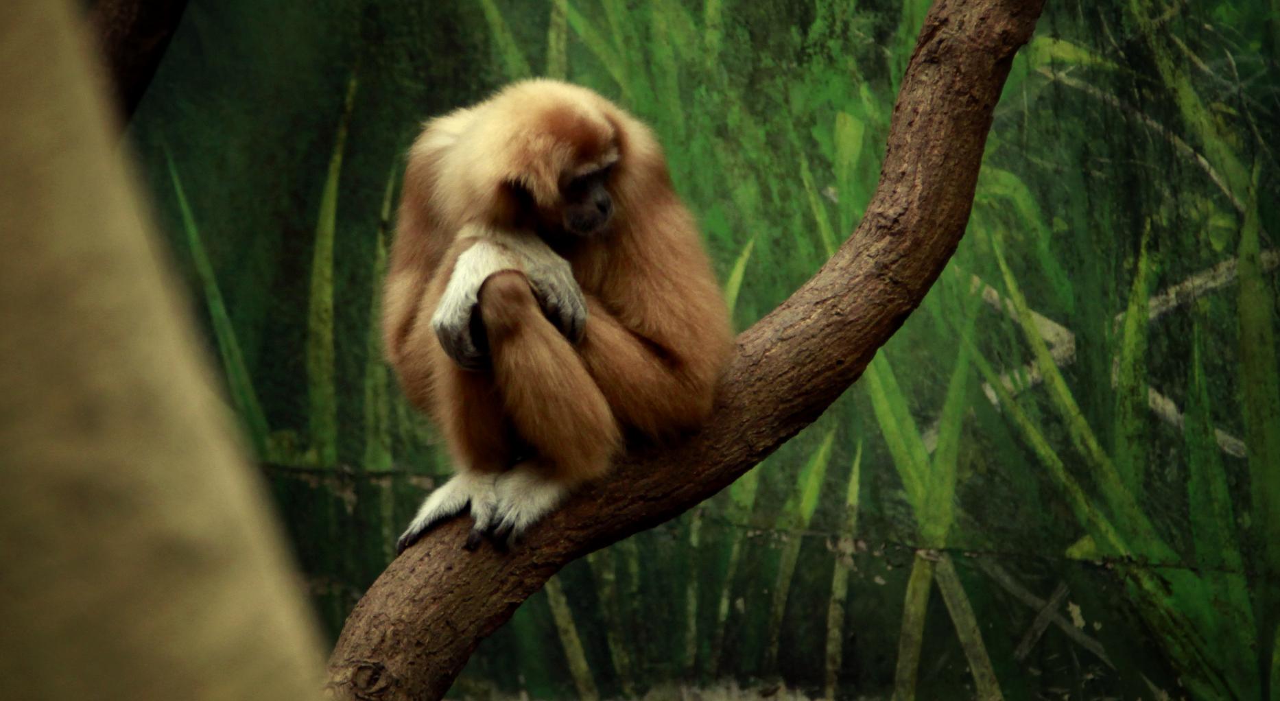 Pensive.